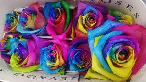 chemistry activity - rainbow roses